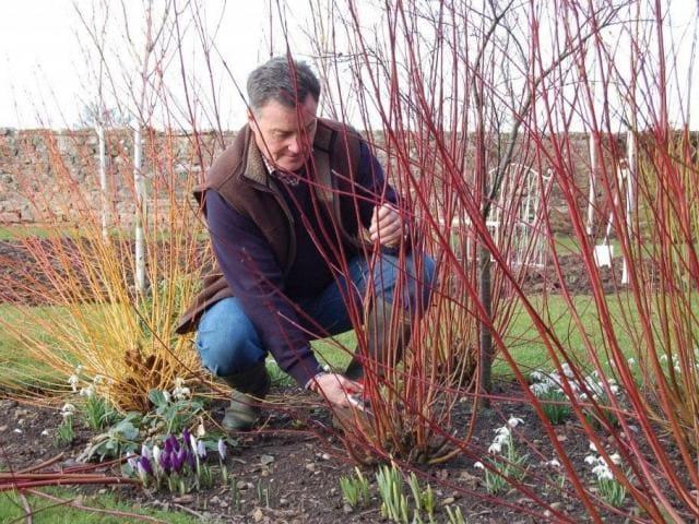 Огородные работы в марте