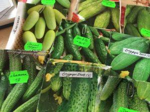 Как правильно выбрать семена огурцов