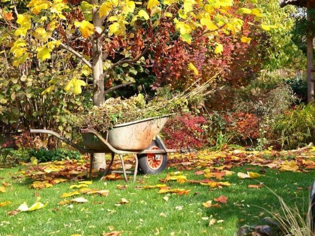 Подготовка сада к зимовке осенью