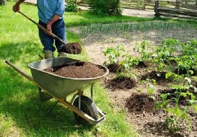 Какие удобрения применяются весной