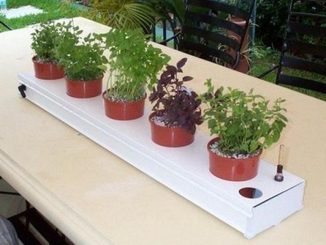 Выращивание комнатных цветов на гидропонике