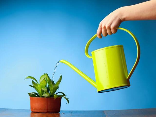 Полив растений и качество воды