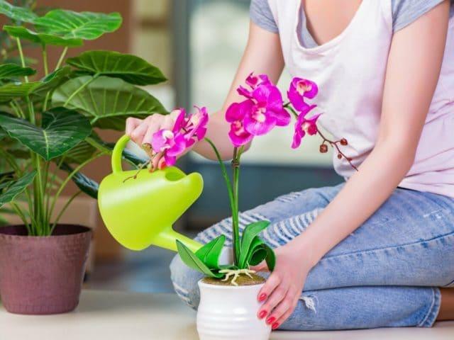 Как правильно поливать комнатные растения чтобы не перелить
