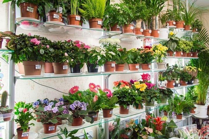 Как правильно покупать комнатные растения в магазине