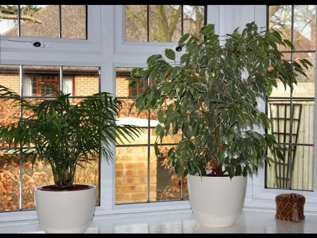 Удачное размещение комнатных растений на окнах