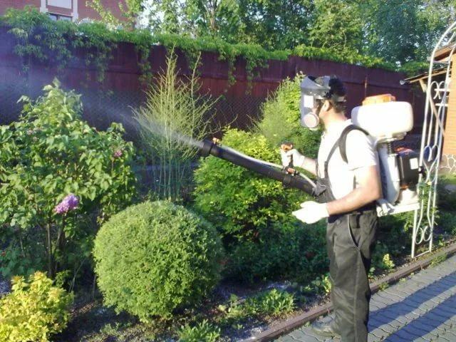 Уничтожение вредителей с помощью растений-инсектицидов