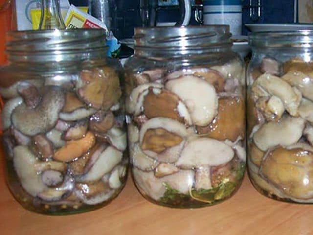 Как приготовить соленые и маринованные грибы сыроежки