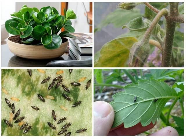 Основные вредители комнатных растений