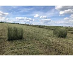 Продам луговое сено в рулонах