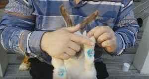 Заразные болезни кроликов