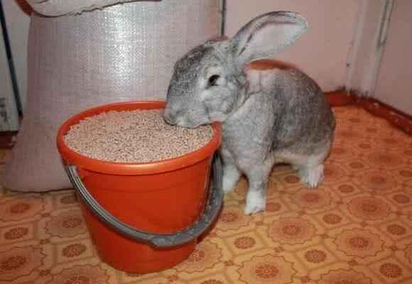 Разновидности и состав корма для кроликов