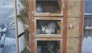 Размещение клеток для кроликов