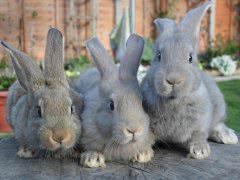Основы кролиководства.Руководство.