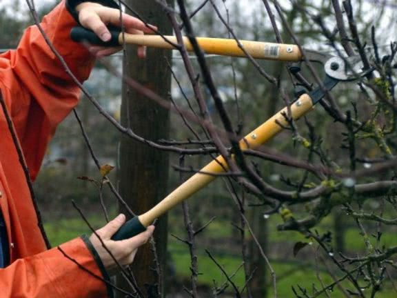 Виды обрезки деревьев. Меры безопасности при обрезке.