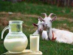 Какая польза от козьего молока