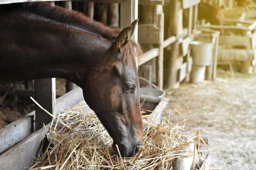 Чем можно кормить лошадь