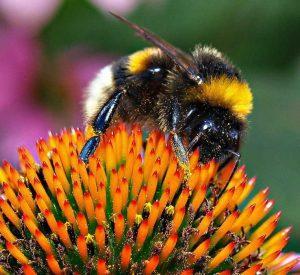 Биологический метод защиты растений от вредителей