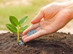Чем удобрять больные растения