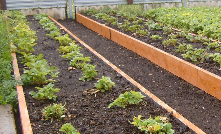 Определяем щелочность и кислотность почвы на участке