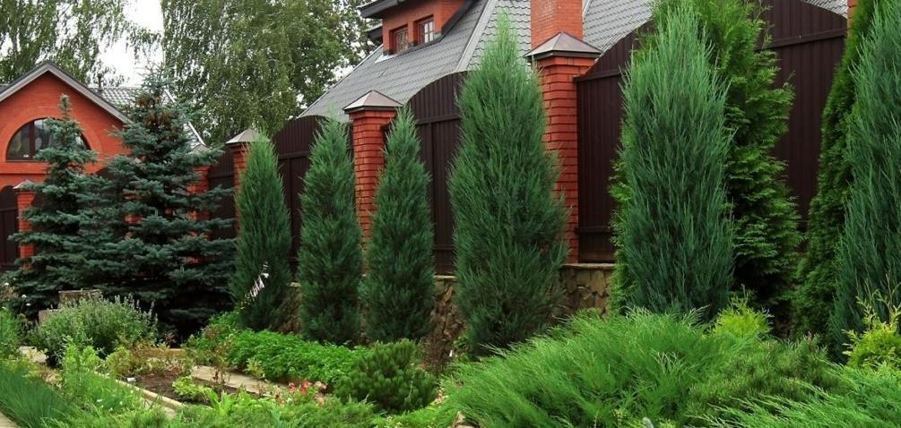 Удобрения для хвойных деревьев и кустарников