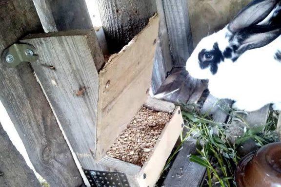 Виды кормушек для кроликов