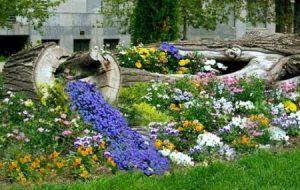 Клумба цветочный ручей своими руками